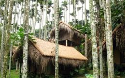 Hut in betel nut grove